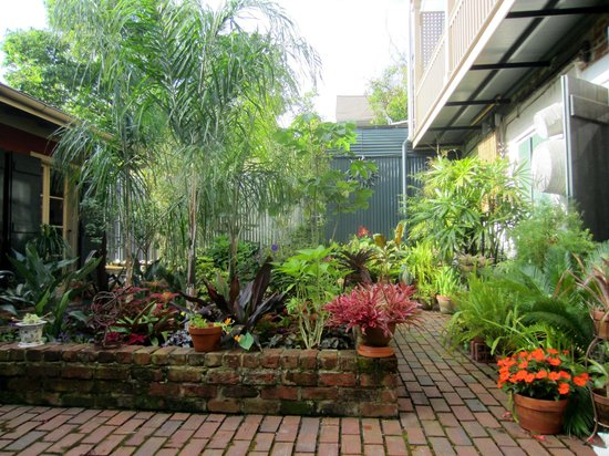 Pierre Coulon Guest House: Courtyard