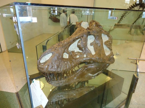 American Museum of Natural History : Dinossauros