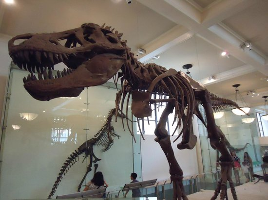 American Museum of Natural History : T-Rex