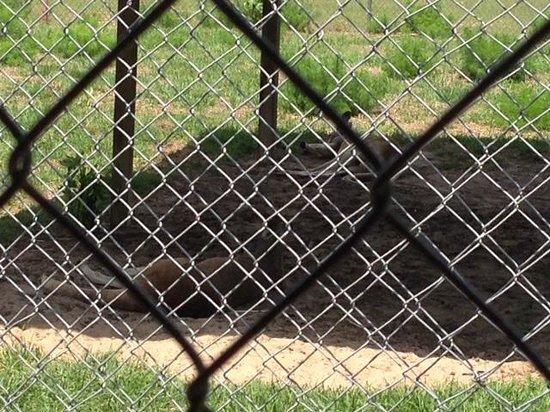 Waccatee Zoo : Kangaroos depressed