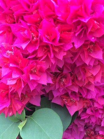 Azul Beach Resort The Fives Playa Del Carmen: Beautiful flowers everywhere!