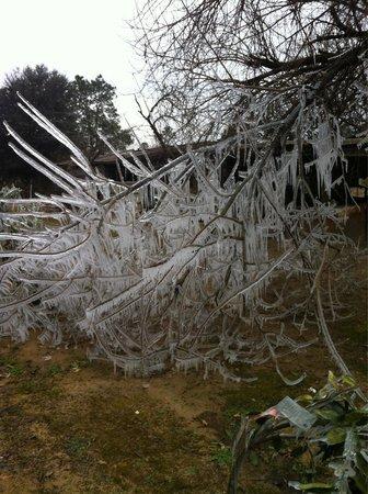 The Silver Door: Our neighbors winter magical garden!