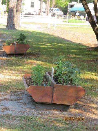 Wilmington KOA: herbs