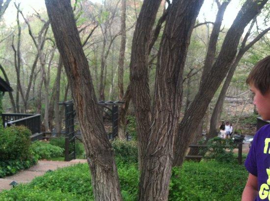 L'Auberge de Sedona: Green and Peaceful