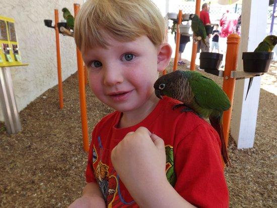 Parrot Mountain & Gardens : My son feeding a parrot on his shoulder