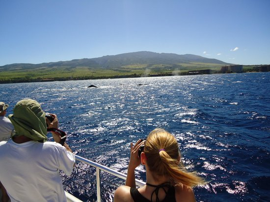 Hula Girl Excursions : Whale sightings