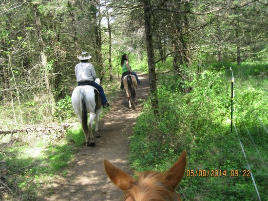 Jordan Hollow Stables: beautiful ride through the trees.