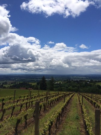 Domaine Drouhin Oregon: View