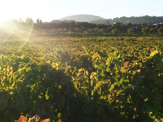 The Wine House Hotel & Restaurant : 朝陽が畑を照らす