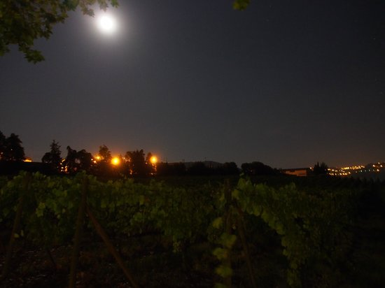 The Wine House Hotel - Quinta dA Pacheca: 月明かりの下のぶどう畑