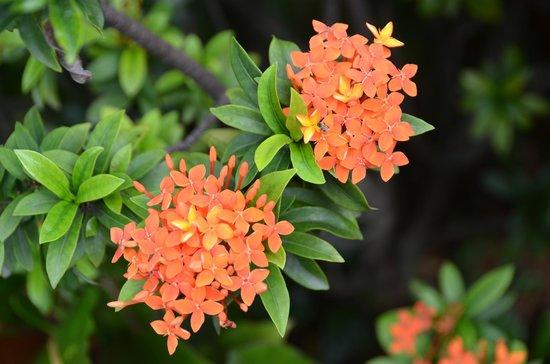 Hotel Majapahit Surabaya managed by AccorHotels: Beautiful flowers on grounds