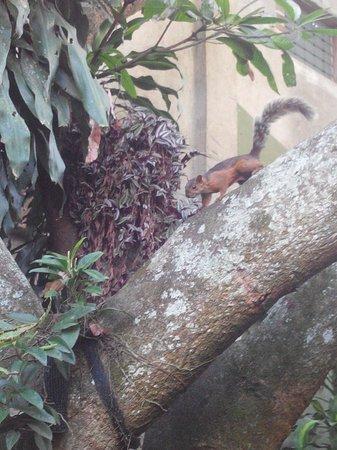 Hotel Aranjuez : Les écureuils au petit déjeuner