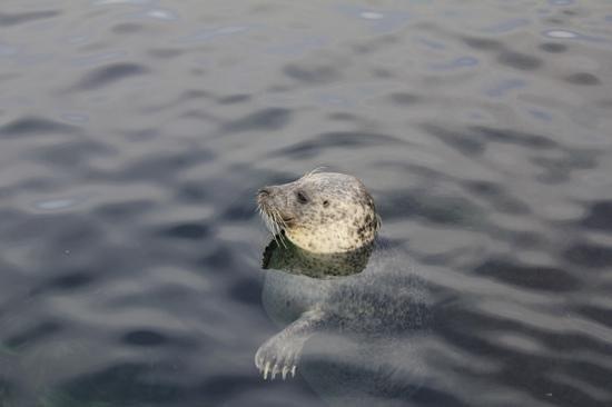 Oceanografic: Ausserhalb der Saison echt gemütlich...