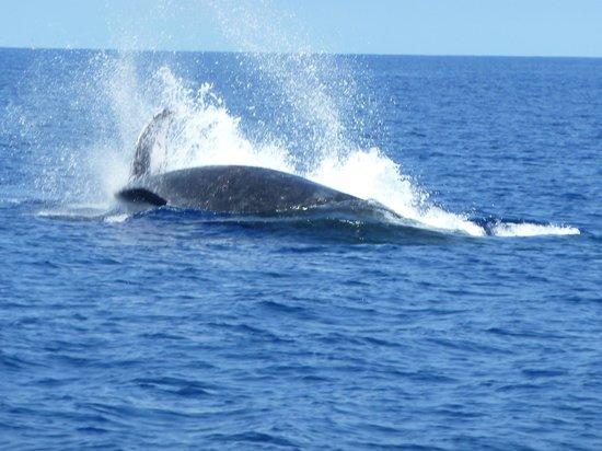 Mauna Lani Bay Hotel & Bungalows: Whale watching was amazing!!!
