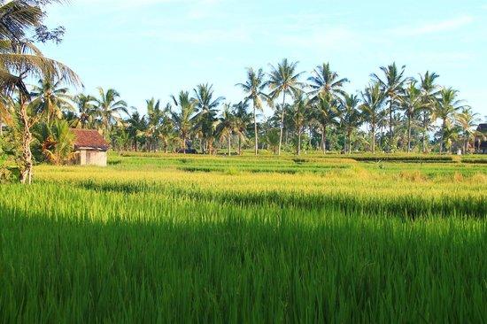 Nirwa Ubud Homestay : Vue depuis le chambre