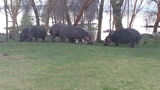 Enashipai Resort & Spa: The nearby lake attracts hippos