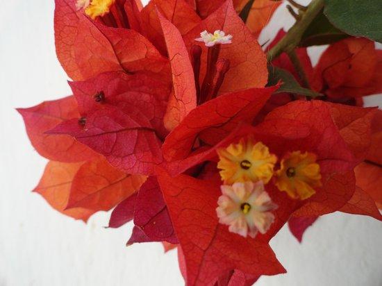Posada Santa Catalina: las Flores del Bugambil