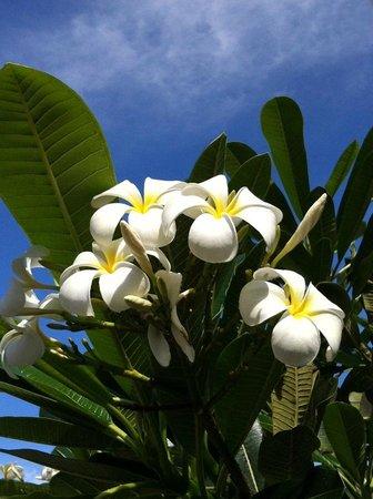 Andaz Maui At Wailea: Plumeria