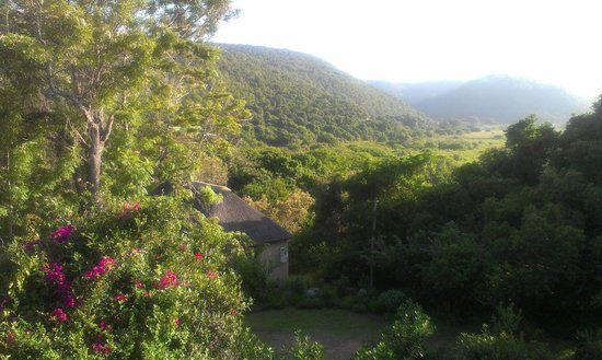 Fairy Knowe Backpackers Lodge: View from verandah onto the magic Wilderness area