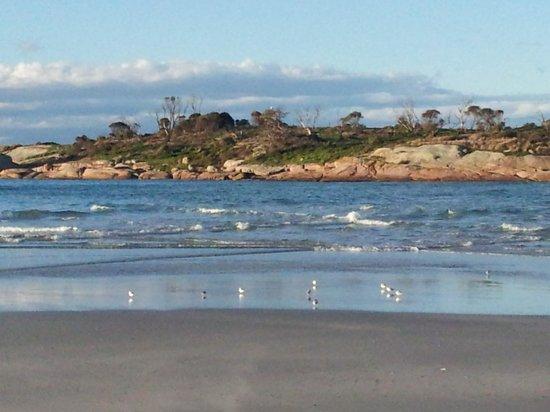 Diamond Island Resort & Penguin Show: Diamond Island from the beach