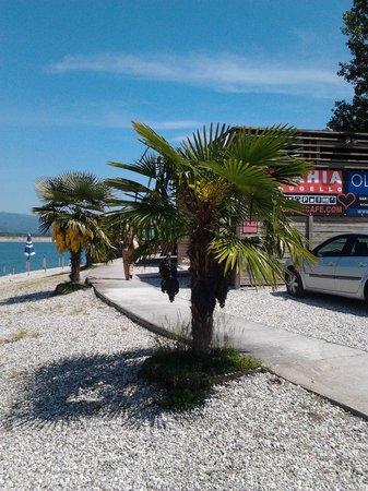 Bahia Cafe : ..vista con palme..