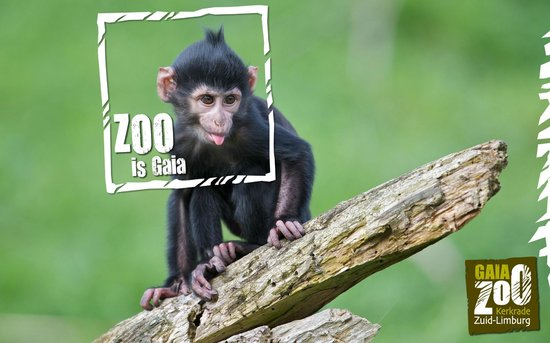 Photo of Zoo GaiaZOO at Dentgenbachweg 105, Kerkrade 6468 PG, Netherlands