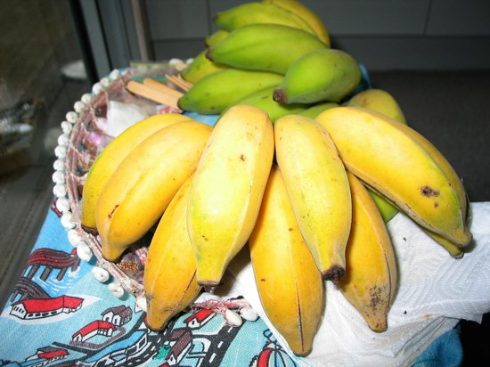 Ngunguru, Nouvelle-Zélande : Our homegrown bananas