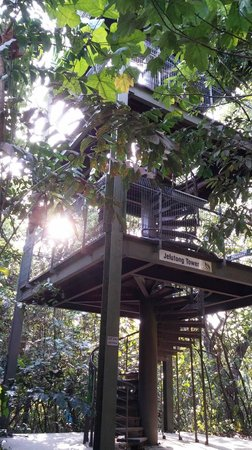 MacRitchie Nature Trail : Windy up there