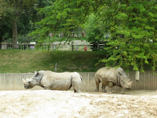 Zoo Aquarium de Madrid : Носороги