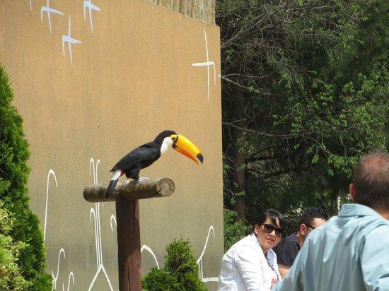 Zoo Aquarium de Madrid : Тукан