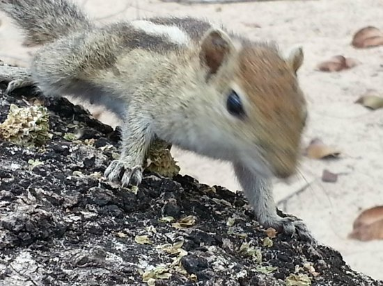 Nilaveli Beach Hotel: The squirrels in the garden