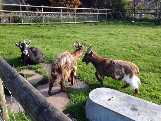 The Tollgate Inn: Say hello to Daphne, Harry and Wills