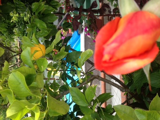Hotel Ristorante La Rondinella Baia di Sorgeto: foto margot