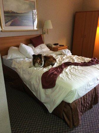 Settle Inn & Suites La Crosse : bed (Sheltie not included)