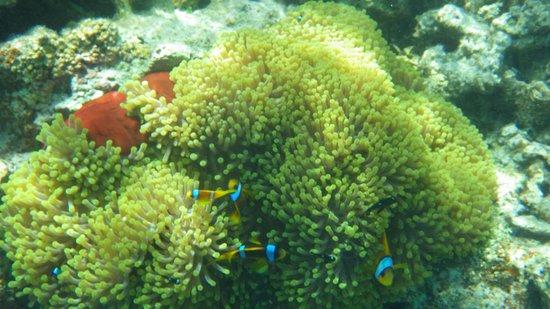 Siva Port Ghalib : coraux magnifiques