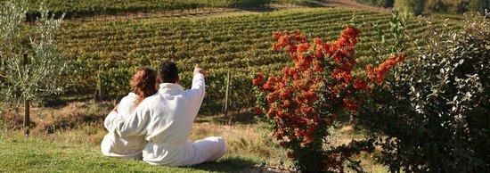 Tenuta Torciano: Tuscan wine holidays in san Gimignano