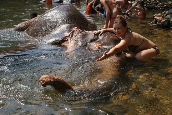 Pernem, Hindistan: Купание в джунглях со слонами.