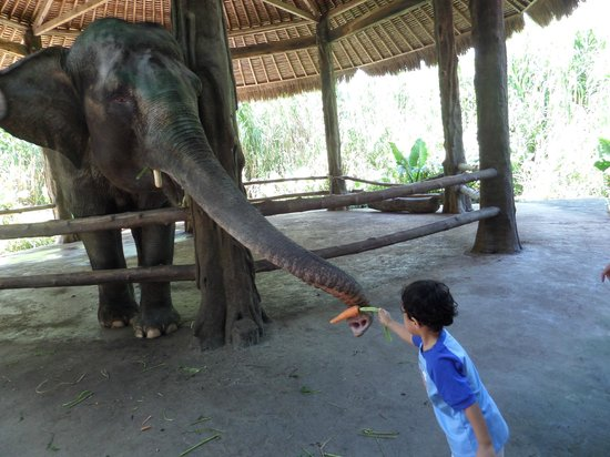 Bali Safari & Marine Park : Feeding the Elephant