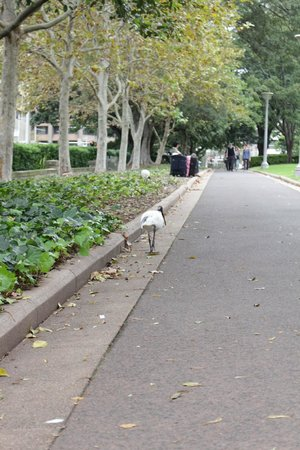 Hyde Park: ハイドパーク
