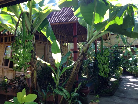 Wood Stock Home Stay : The outside of my bungalow