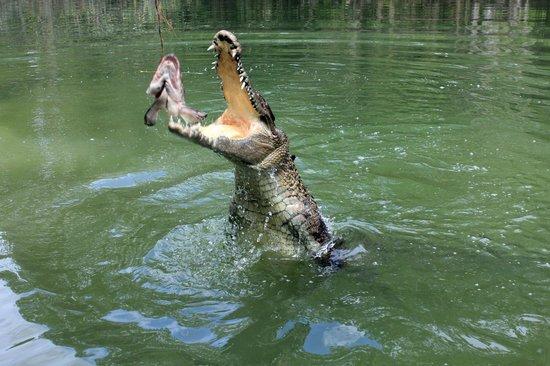 Hartley's Crocodile Adventures: Crocodile in action