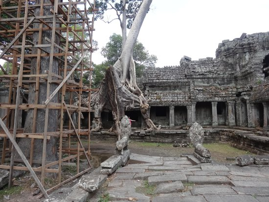 Preah Khan : The Tree
