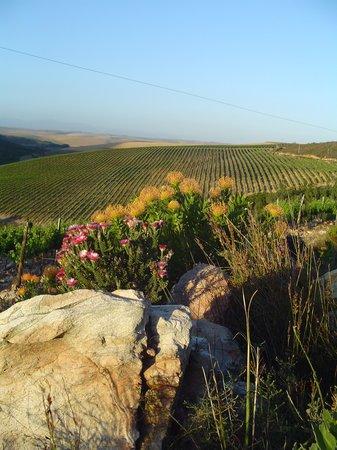 Raka Wine: Biodiversity