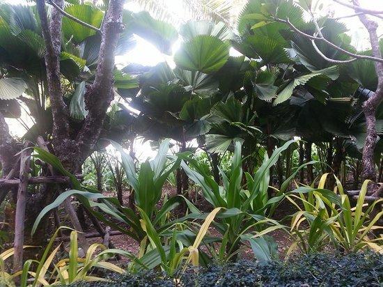 Millennium Resort Patong Phuket : view from the balcony...