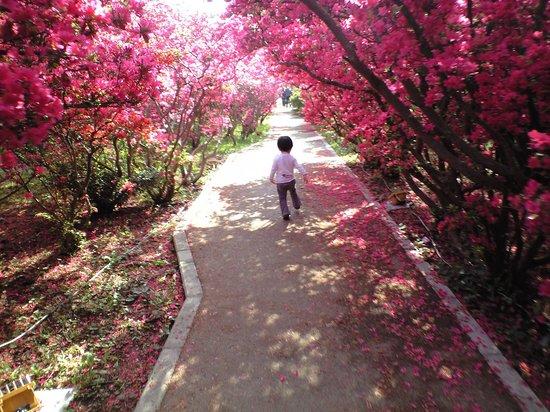 Komuroyama Park: 1歳半の子供の背と比較
