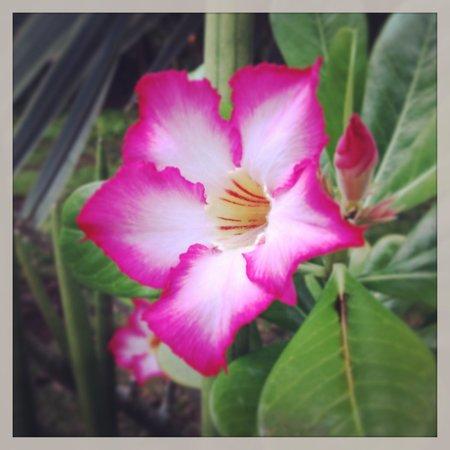 Belmond Maroma Resort & Spa: Lush tropical landscaping