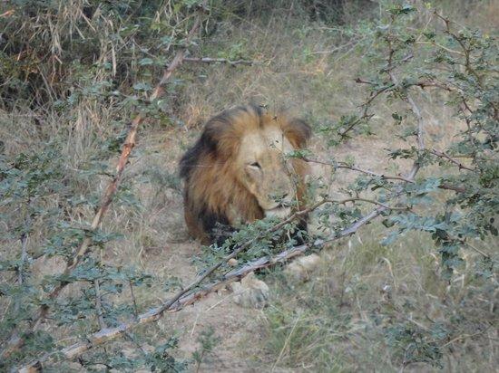 Kapama River Lodge: Safaris