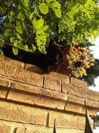 Agriturismo Biologico La Cortevilla: il guardiano della Cortevilla