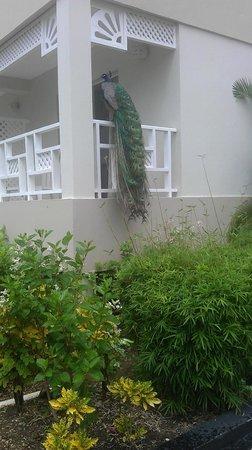 Vista Sol Punta Cana : Entrada a las habitaciones