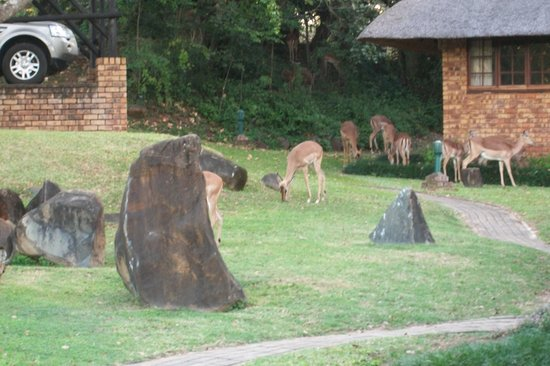 Kruger Park Lodge: Peaceful with bucks all around you.